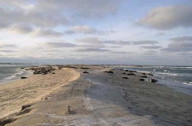 Кочующий остров Сейбл