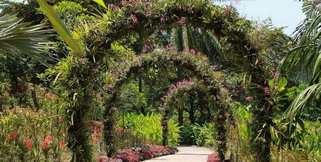 Парк орхидей в Сингапуре