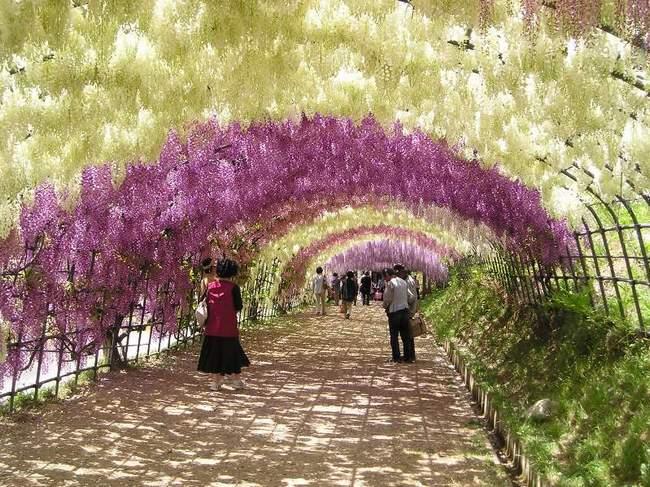 Сад Кавати Фудзи