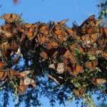 Заповедник бабочек Марипоса-Манарка