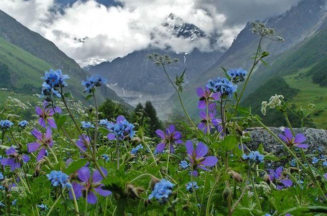 Долина Цветов – уникальный уголок Индии