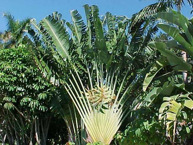 Растения острова Мадагаскар