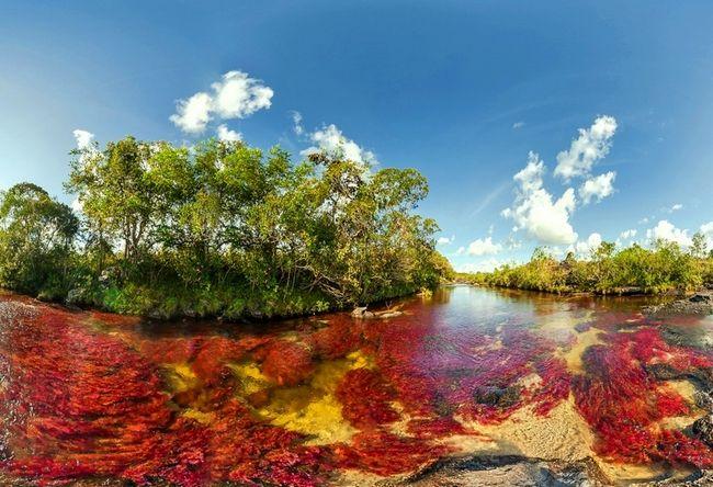 Река Каньо-Кристалес в Колумбии