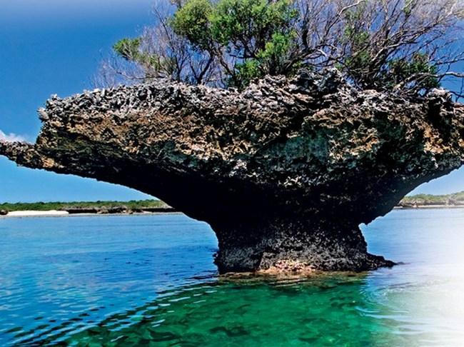 Атолл Альдабра. Сейшельские острова