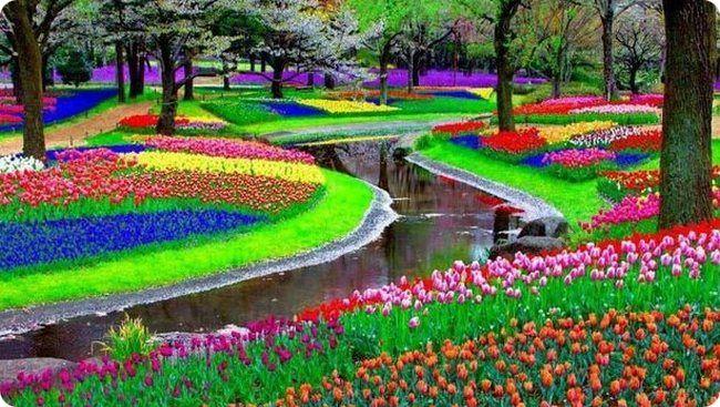 Картинки по запросу парк цветов Кюкенхоф (Keukenhof)