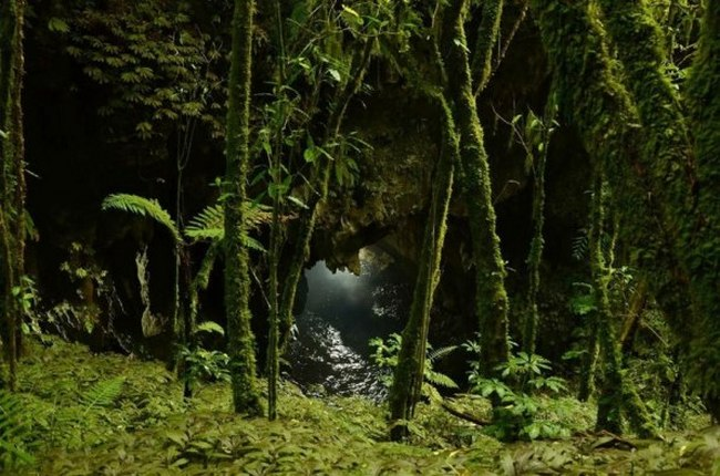 Новая Зеландия - Пещера Светлячков