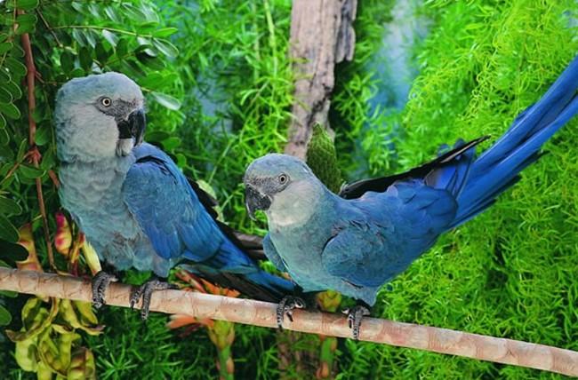 попугаи, Чудесный Лоро Парк. Остров Тенерифе. Испания.
