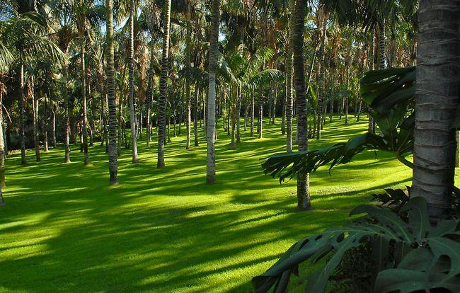 Чудесный Лоро Парк. Остров Тенерифе. Испания.