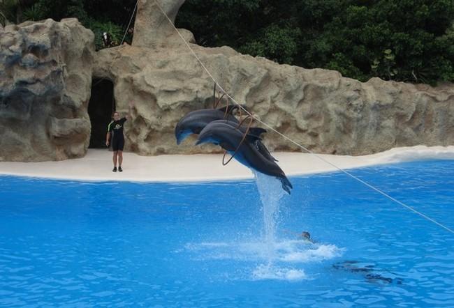 Чудесный Лоро Парк на Острове Тенериф, Испания