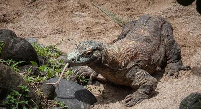 Парк рептилий на Бали питон