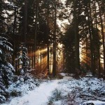 Шварцвальд или «черный лес» Германия