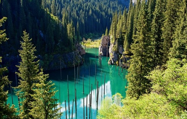 Затопленный лес в Казахстане на озере Каинды