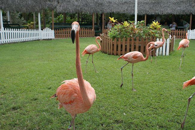 Национальные парки Багамских островов