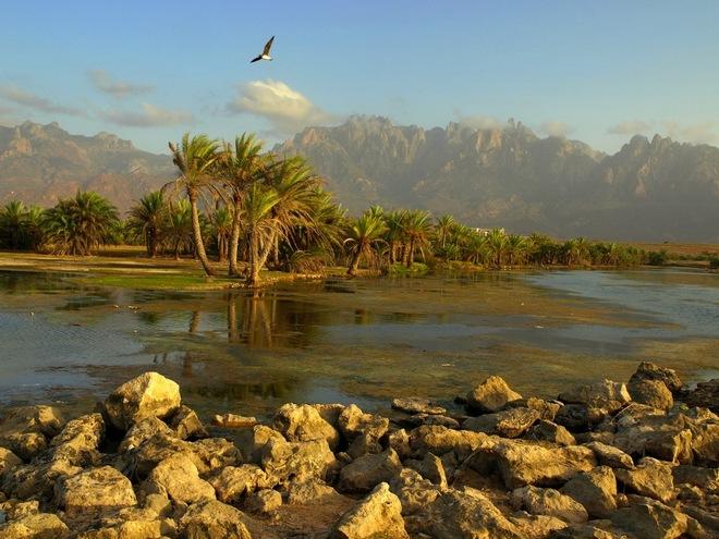 Фантастический пейзаж острова Сокотра