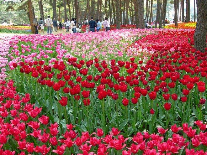 Великолепный парк Хитачи в Японии