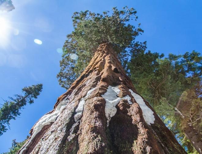 Деревья-гиганты на просторах США